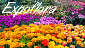 Expoflora – Holambra