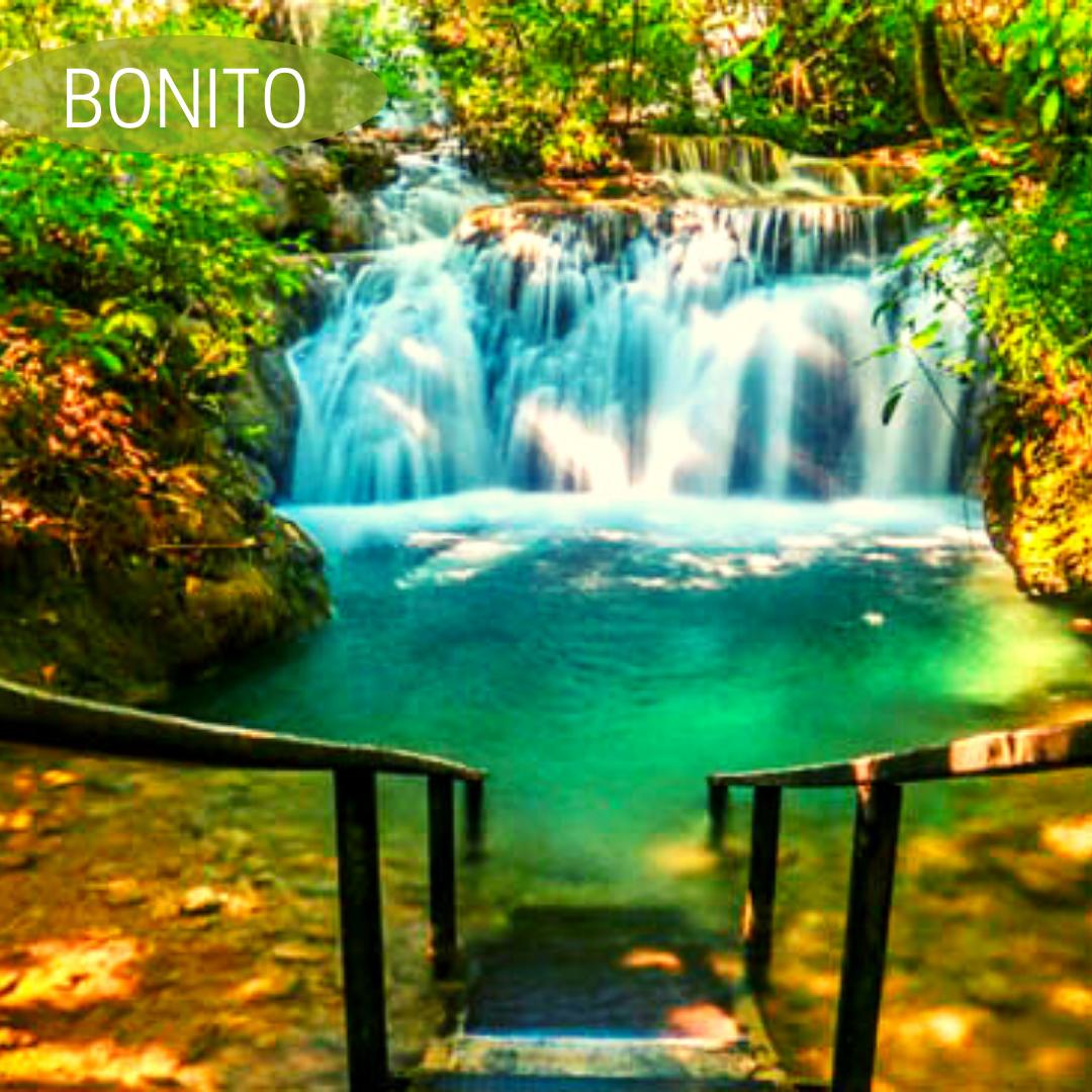 Bonito-MS